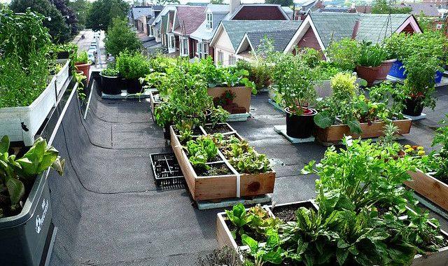 Green Community Roof Top Demo Diy Lowell